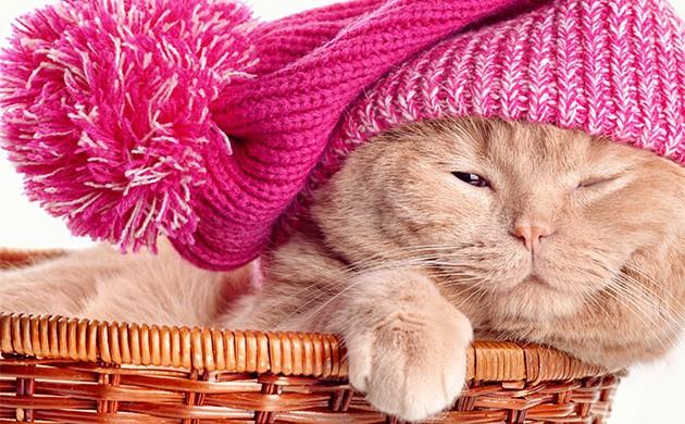 La cuccia ideale per un Gatto :-)