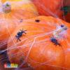 Ragni di plastica allestimento halloween festa accessori party PHK10 - Kadosa